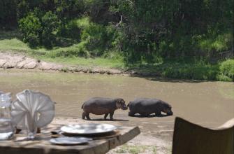 Сафари в Африке: не пыльно и со вкусом