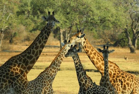 Открывая Африку. Путешествие в Замбию