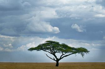 Сезон сафари в Африке