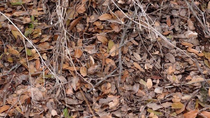 Найдите здесь ящерицу. Подсказка: она в самом центре фото