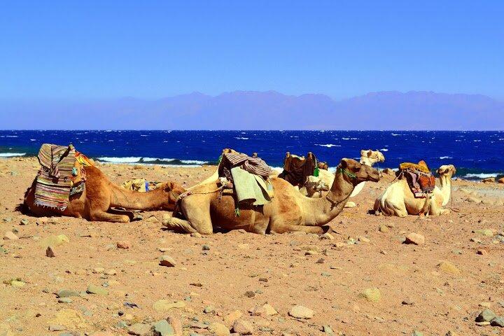 Отпуск в Южном Синае. Личный опыт