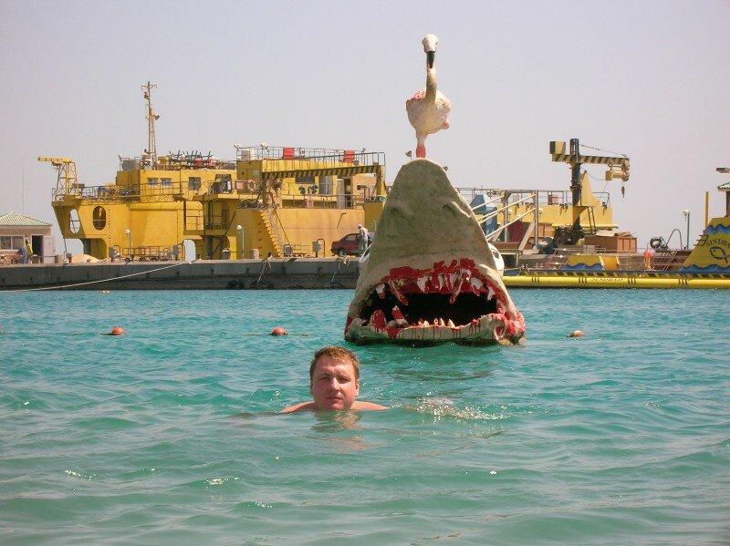 акулы в Красном море - не редкость
