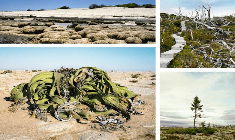 Древнейшие формы жизни на планете